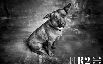 Lucy the Dog – Pet Session